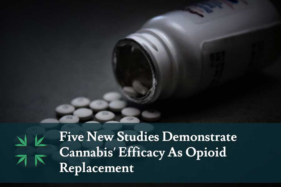 marijuana opioid replacement