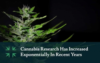 Marijuana Research Increasing