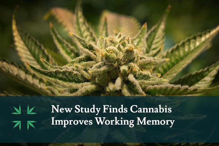 Study cannabis improves working memory