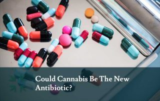 cannabis-antibiotic