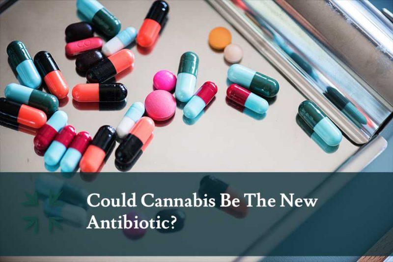 cannabis-antibiotic