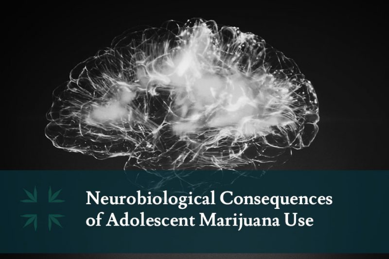 Neurobiological Consequences adolescent marijuana use