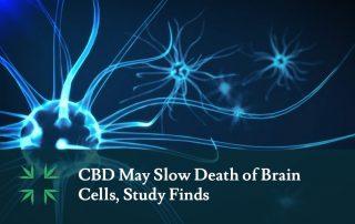 cbd slow brain cell death study