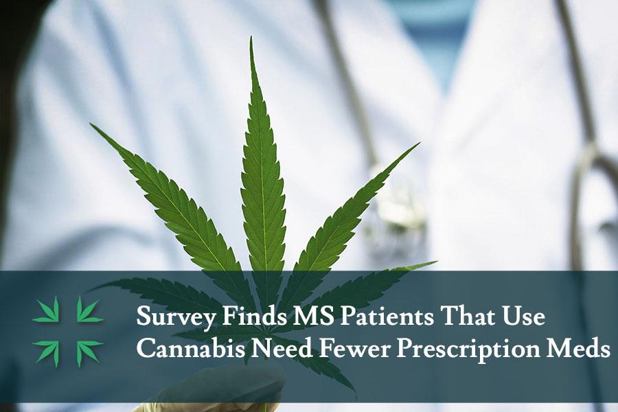MS cannabis users need fewer prescription medications